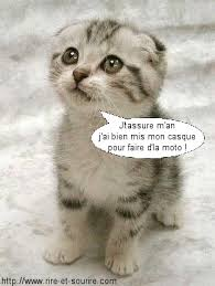 Chat mdr
